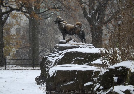Balto with snow in Central Park