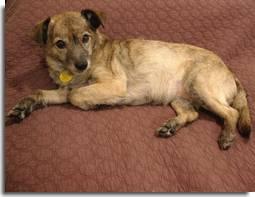 Humidified dog