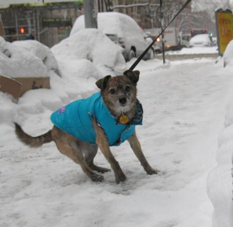 Dog in snow New York City
