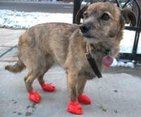 Billie wearing PAWZ boots