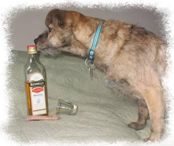 Dog, whiskey