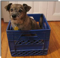 dogs say no to crates & kennels