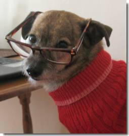Smart dog vs idiot Marilyn vos Savant