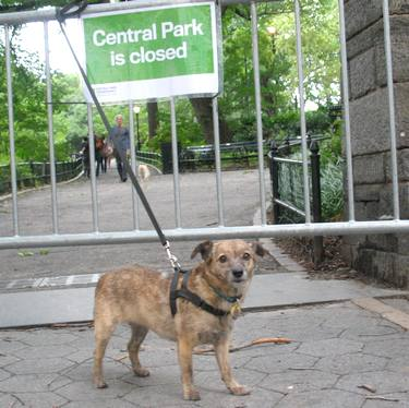 Central Park is closed?
